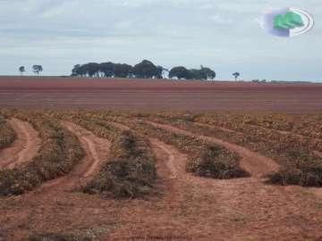 Fazendas no bairro Rural na cidade de Rancharia