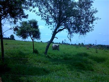 Terrenos Vila Santa Isabel R$55.000,00