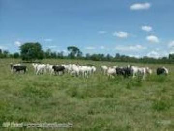 Fazendas Torixoreu