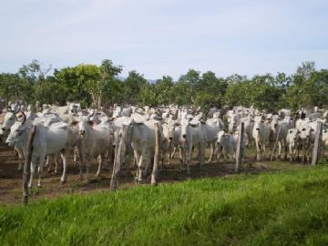 Fazendas Parana