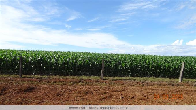 Fazendas em Canarana no bairro Não Especificado