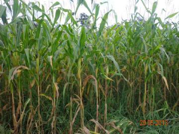 Fazendas  Primavera do Leste R$15.000.000,00