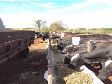 Fazendas no bairro Não Especificado na cidade de Santa Vitoria