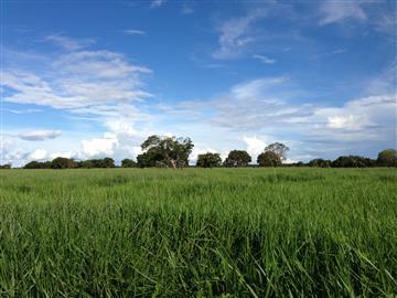 Fazendas no bairro Não Especificado na cidade de São Felix do Araguaia