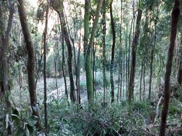 Terrenos Mairiporã R$ 195.000,00