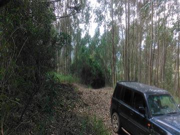 Chácaras só Terra Bom Jardim R$90.000,00