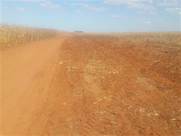 925 Hectares com 390 ha de lavoura de soja em Campo Novo do Parecis-MT - 300 mil sacas Fazendas  Ref: 2905