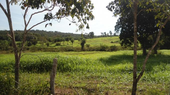 Fazendas em Rochedo no bairro Não Especificado