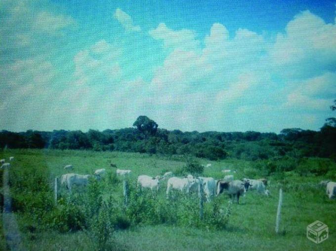 Fazendas em Aquidauana no bairro Não Especificado