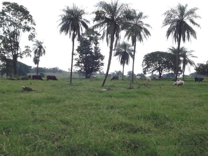 Fazendas em Costa Rica no bairro Não Especificado