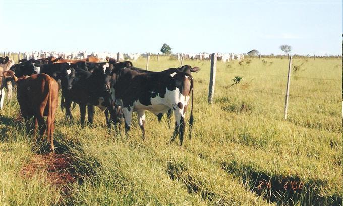 Fazendas em Rio Verde de Mato Grosso no bairro Não Especificado