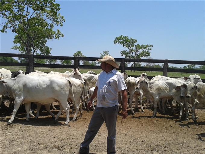 Fazendas em São Gabriel do Oeste no bairro Não Especificado
