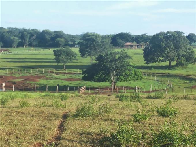 Fazendas em Rochedinho no bairro Não Especificado