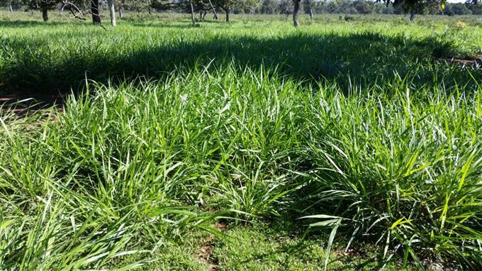 Fazendas em Dois Irmaos do Buriti no bairro Zona Rural