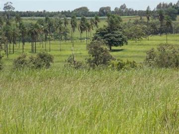 Fazendas no bairro Não Especificado na cidade de Paranaiba