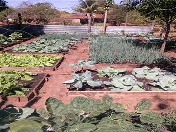 Fazendas no bairro Zona Rural na cidade de Paraiso