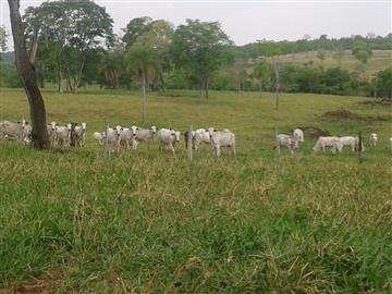 Fazendas Maracaju