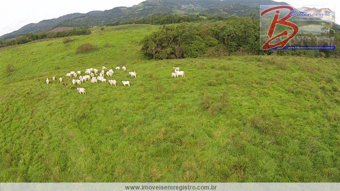 Fazendas em Registro no bairro Zona Rural