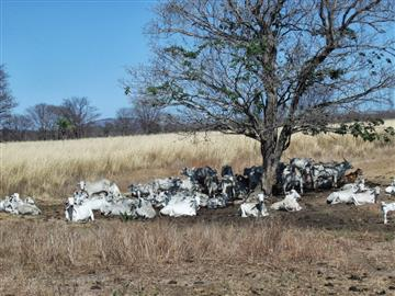 Fazendas  Juvenilia R$1.800.000,00