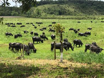 Fazendas  Iguape R$Consulte-nos