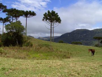 Terrenos Urubici R$ 1.000.000,00