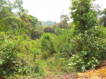 Terrenos  Monte Verde R$250.000,00